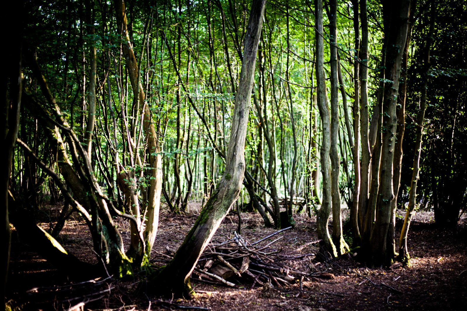 woods wood trees