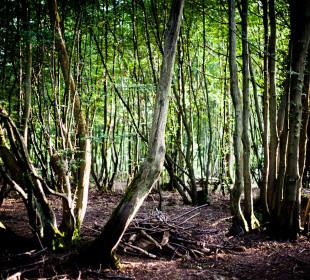 A Woodland Microadventure